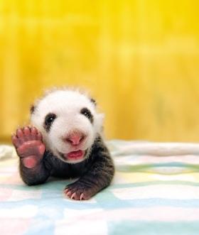 hello-cute